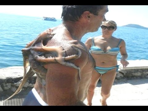 Thumbnail: 20 Sea Creatures That Actually Exist