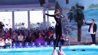 Шоу с дельфинами в минском дельфинарии «Немо»