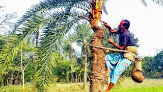 This is the tree which give fruit  as along with Date juice Bangladesh