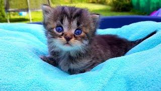 Бедный маленький котенок остался один! Трудные роды у кошки Только один котенок выжил! Наши котята💗