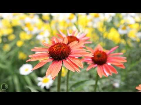 Beautiful Garden Tour | SPRING/SUMMER GARDEN HD