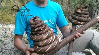 Веревка / канат из елки  wooden rope primitive technology