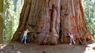 США, парк Секвоя -гигантские деревья. Почему лесной пожар полезен?(В этой серии, мы с группой, включая Серегу Симонова и его жену Вику, едем в национальный парк Секвойя. Там..., 2016-12-27T12:00:02.000Z)