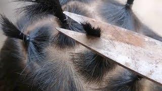 Funny | DIY haircuts popular on Dragon Head-raising Day due to coronavirus
