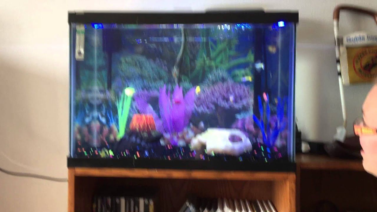 20 gallon fish tanks the image kid has it for How many fish in a 20 gallon tank