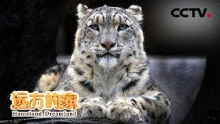 《远方的家》 20190820 长沙贡玛国家级自然保护区 长沙贡玛:探秘湿地公园 寻找高山雪豹| CCTV中文国际