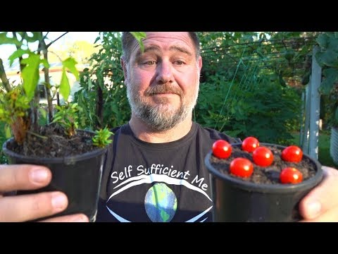 What Happens When You Grow Tomatoes From Tomatoes?