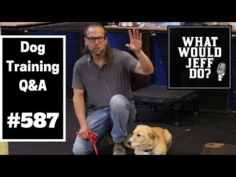 dog-training---dog-chases-cats---dog-storm-anxiety---what-would-jeff-do?-q&a-ep.587-(2019)
