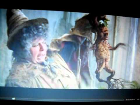 Harry Potter Mandrake Scene