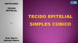 Epitélio Simples Cúbico