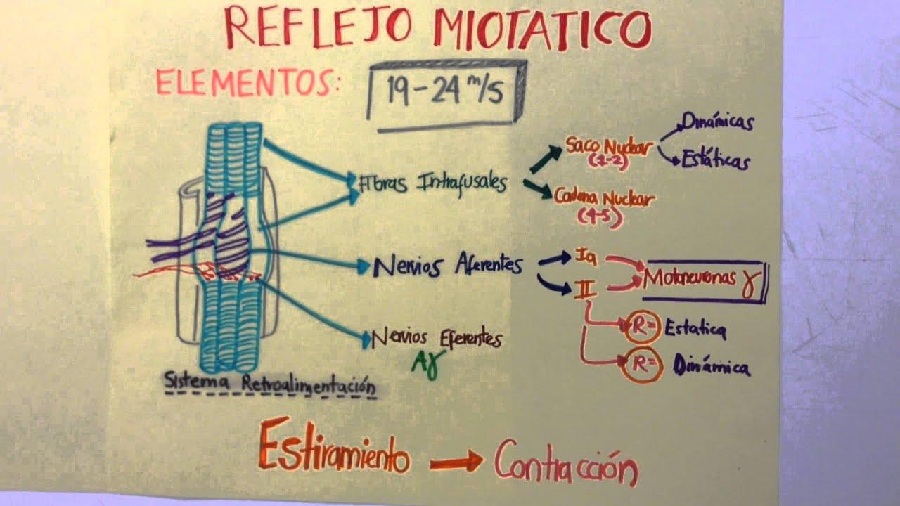 Reflejo Miotatico UDLAP 2013 - YouTube
