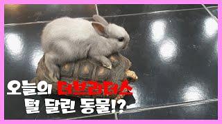 파충류 샵에 사는 토끼