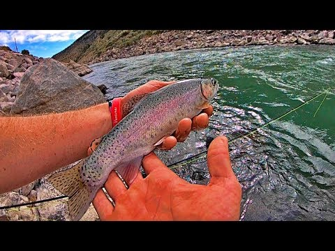 THESE TROUT ARE INSANE!!!! Wyoming Fly Fishing