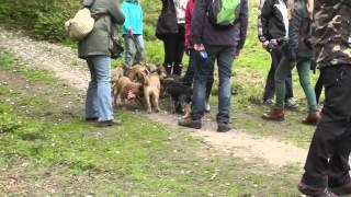 Border Terrier meeting #BTSurreyPicnic