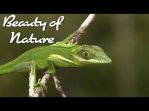 Nature Documentary Beauty of Nature: Central American