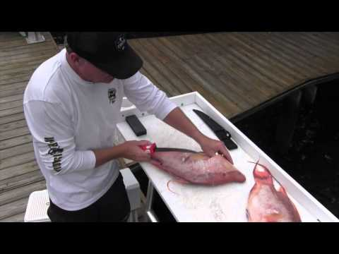 How To Fillet A Hogfish