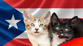 meet-the-cat-heroes-of-puerto-rico