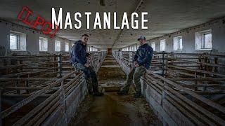 LOSTPLACE | verlassener Stall | Rinder 🐮  und Schweinemast 🐷 | HILLBILLY TV