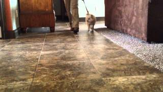 Man's Best Friend Dog Training Llc