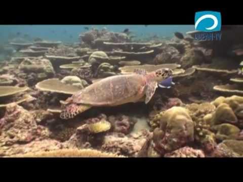 Фото сосущих релакс видео подводный мир как телка прыгает