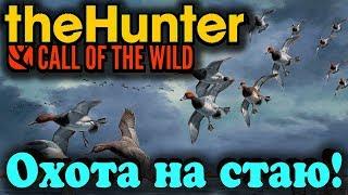 Дробитель уток или маскировка гуся - theHunter: Call of the Wild (Стрим Охота)
