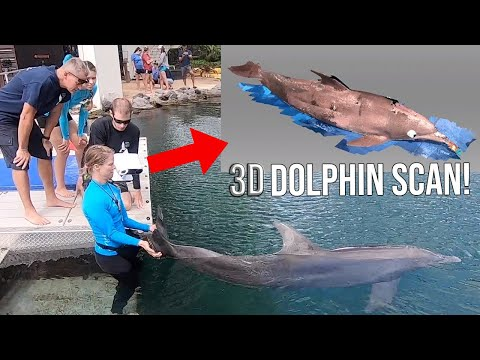 Dolphins, Drones, And 3D Scanning - Dolphin Quest Oahu