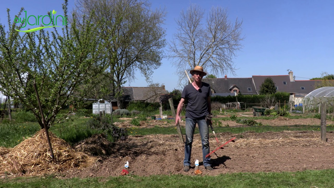 Comment Cultiver Les Oignons comment planter la pomme de terre ?