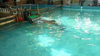 Дельфинарий(Это просто чудо какое-то. Ярославский дельфинарий., 2014-02-23T13:50:56.000Z)