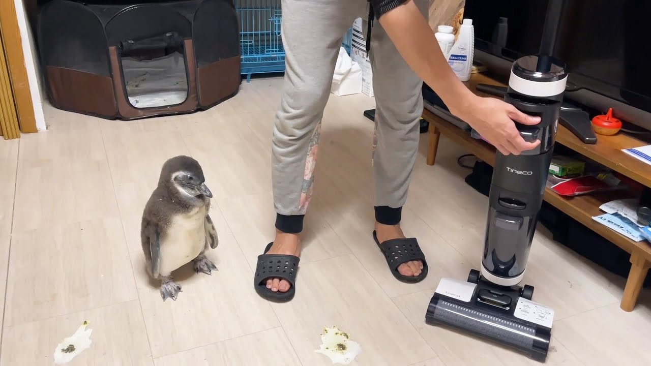 毎回床を汚すペンギンさんがいたので掃除機で全部吸いこんでしまいました。