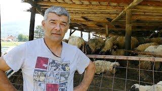 Lopovi od Ante ukrali 170 ovaca