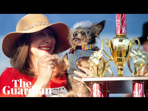 Jackie -  Scamp the Tramp wins World's Ugliest Dog Contest