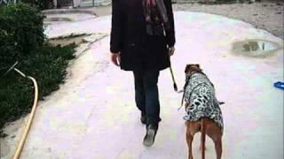 Pekin paseando (Asoka)