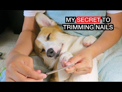 HOW TO TRIM YOUR DOG'S NAILS - OUR BEST KEPT SECRET!!!