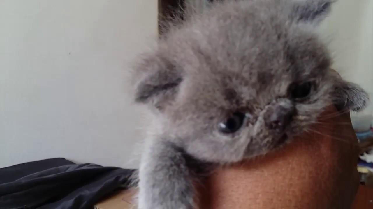 Cara Mengobati Anak Kucing Sakit Flu   How to Cure Kitten ...