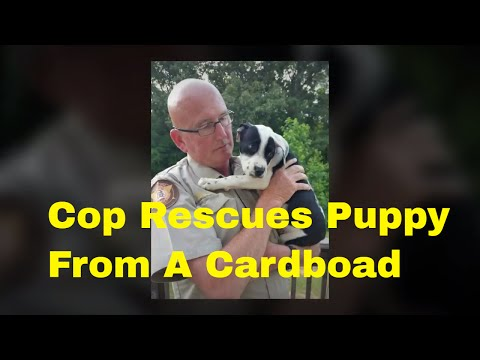 Dog Rescue :Cop Rescues A Puppy Trapped Inside A Box