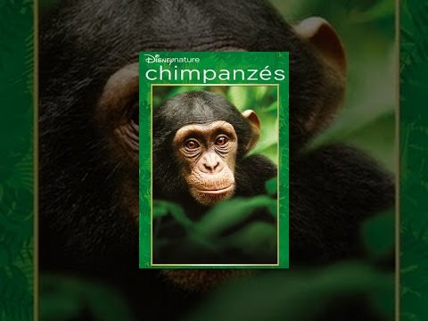 Chimpanzes (VF)