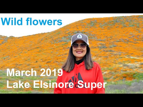 2019 Lake Elsinore Super Blooms