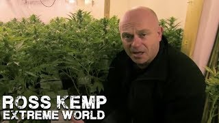 London Cannabis Farm | Ross Kemp Extreme World