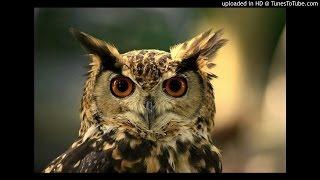 Download Suara Kicau Burung Hantu