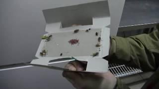 Уничтожение клопов, уничтожение тараканов, обработка от насекомых(, 2015-10-27T09:15:46.000Z)