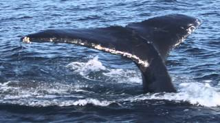 LIVING WATERS—The Majestic Power of a Humpback Whale