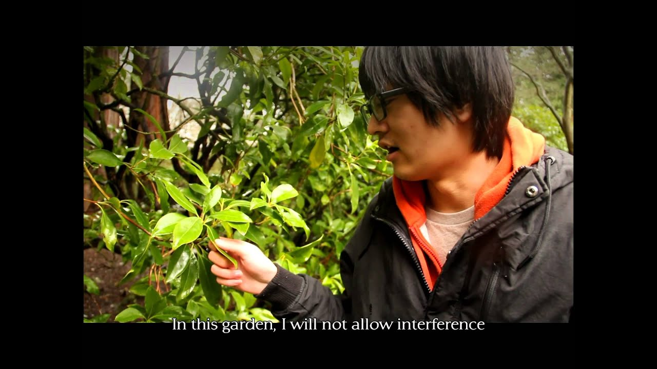 msn short film garden of evening mist - The Garden Of Evening Mists