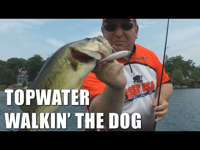 How to Walk a Topwater Spook or Sammy