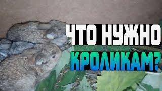 малюсенькие кролики