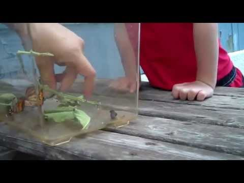 Little Boy Has Adorable Reaction to a Butterfly Landing on His Nose
