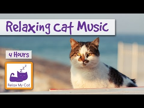 4 Hours of Relaxing Cat Music. Help your Kitten Keep Calm!