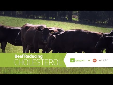 Beef reducing cholesterol – A new research project funded by High-Value Nutrition
