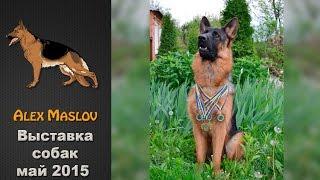 """Выставка собак """"Best Dog"""""""