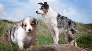 Time Lapse: Puppy to Adult l Border collie