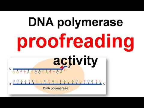 proofreading in dna replication